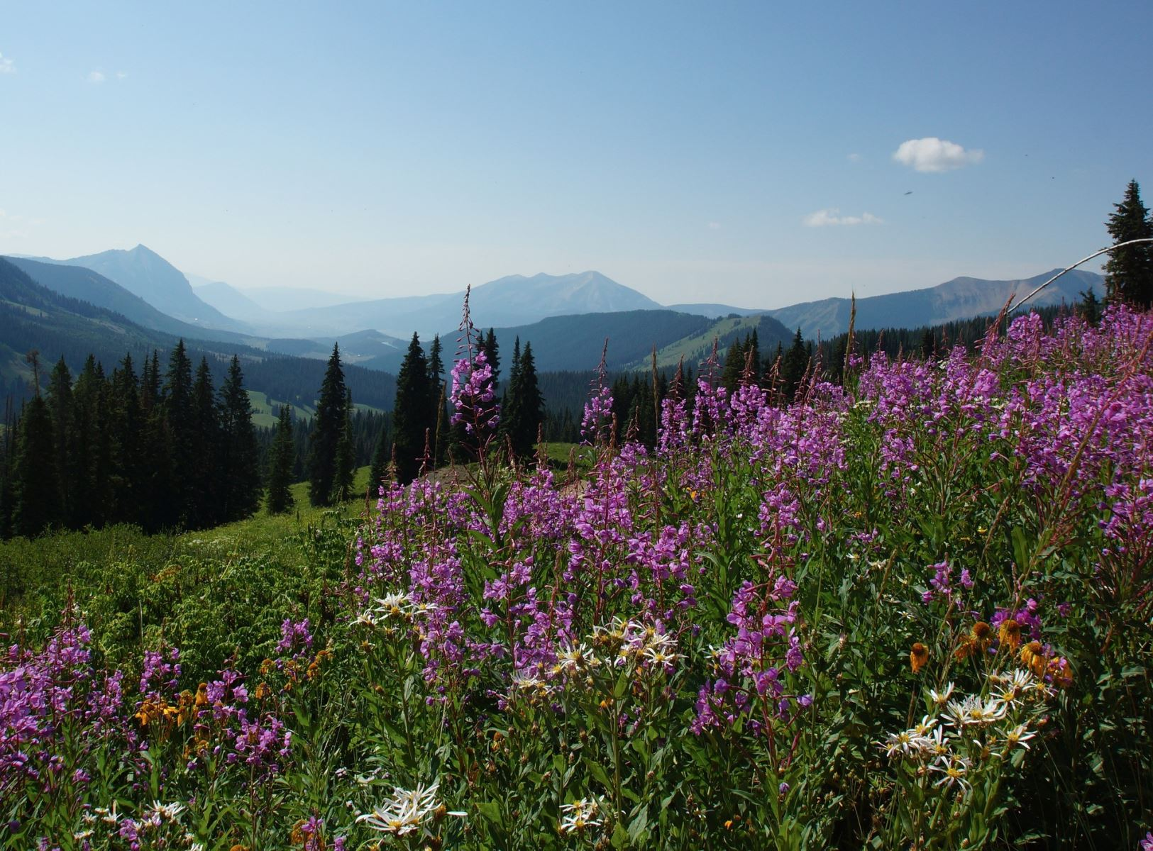 Vail Mountains with Wildflowers