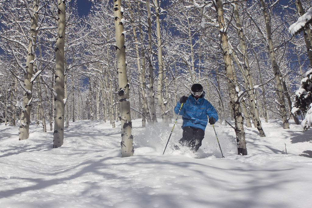 beaver creek skier in trees