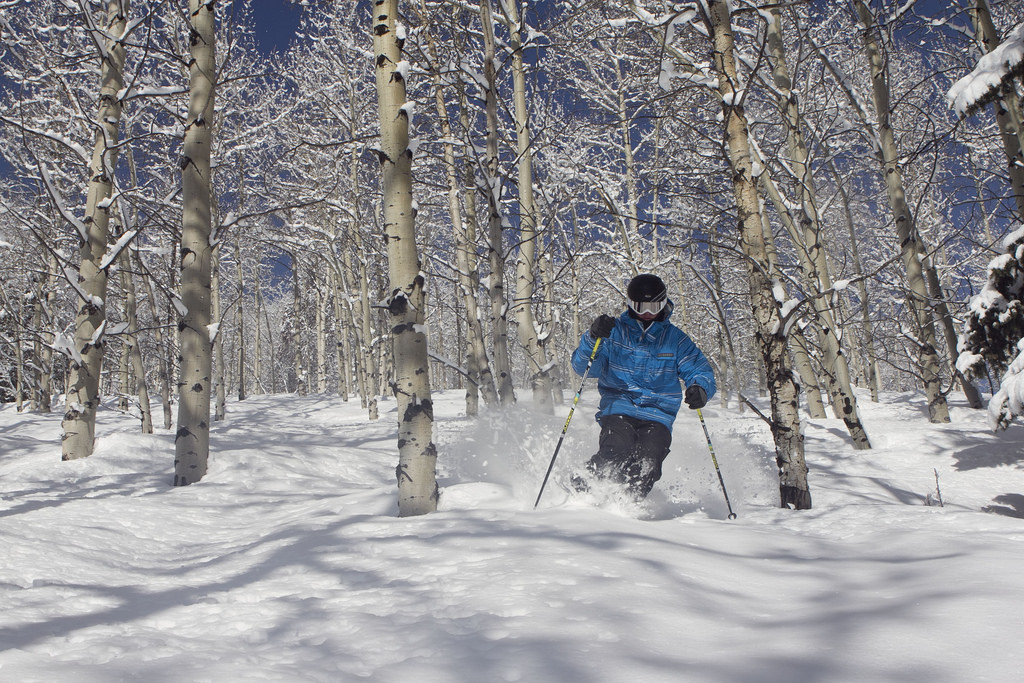 beaver creek colorado skier in trees in powder