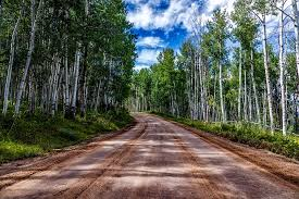 dirt road through aspens in summer in vail colorado