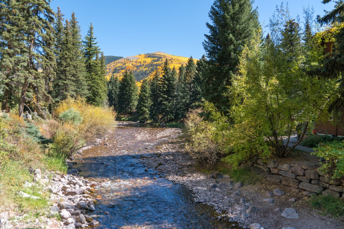 Fall colors Vail, Colorado